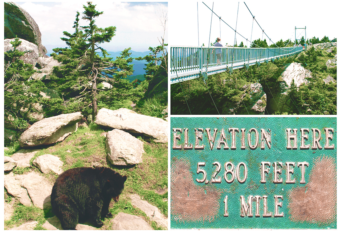 Image of bear and mile high swinging bridge at Grandfather Mountain in NC