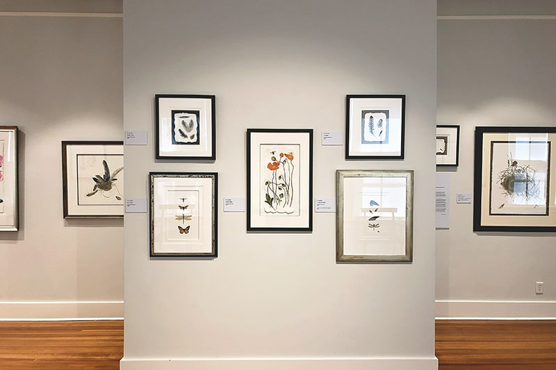 Gallery wall at the Coastal Discovery Museum with framed flora and fauna from the Lowcountry.